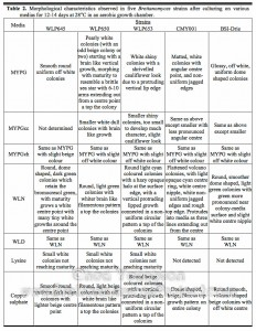 Morphological characteristics of Brettanomyces yeasts