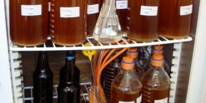 Brettanomyces pure culture fermentation Incubator